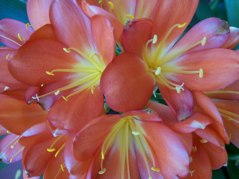 Fiori e Colori - Flowers and Colours