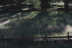 fiori ed ombre