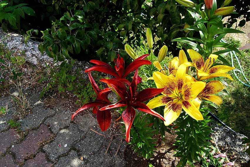 fiori nel palazzo del Principe Genova
