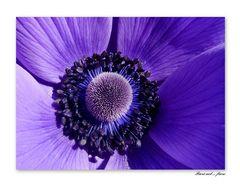 Fiori nel...fiore