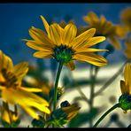 fiori per te..