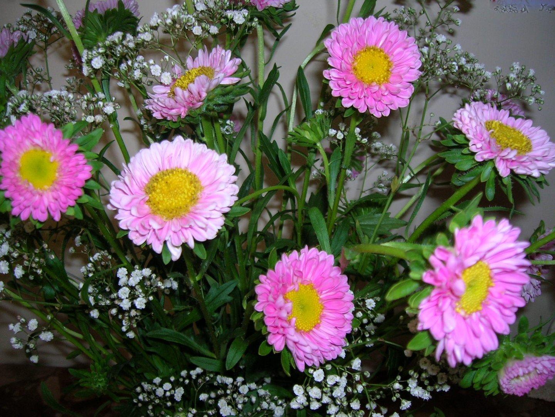 Fiori rosa foto % immagini piante fiori e funghi animlii