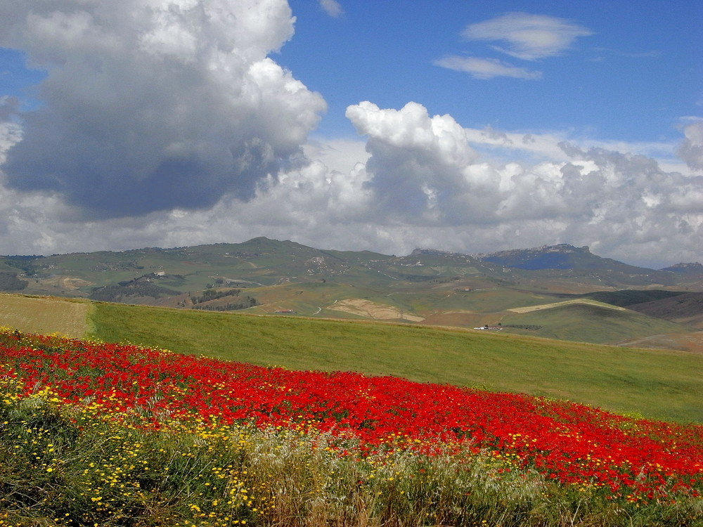 .: fiori rossi :.