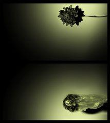 Fiorin fiorello.................