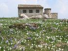 Fioritura a M.ga Basiana (Monte Baldo)
