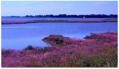 Laguna e isole
