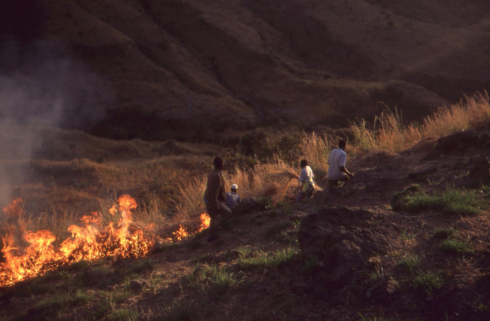 Fireline zum Schutz des Waldes - Westsudan/Provinz Dafur 1994