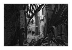 Firenze [19]