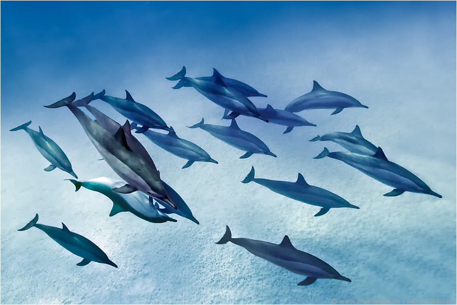 ~ first dolphin II ~