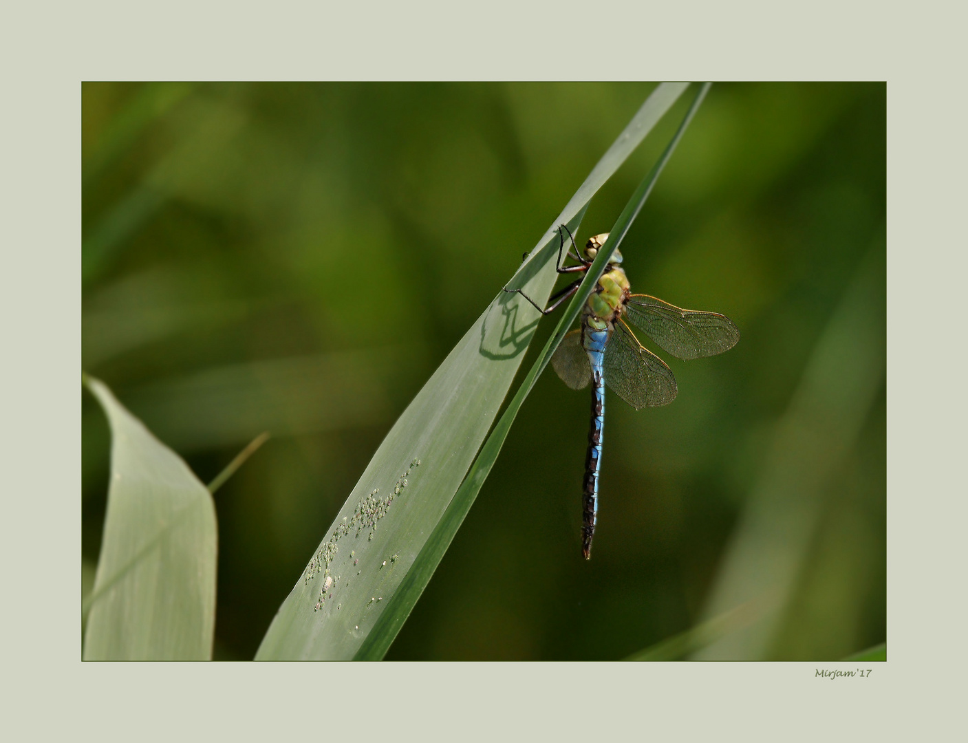 First dragonfly ..
