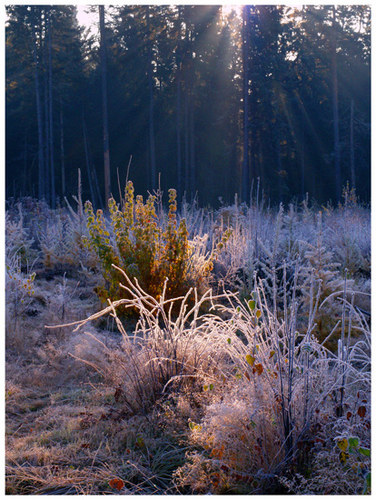 First frosty morning