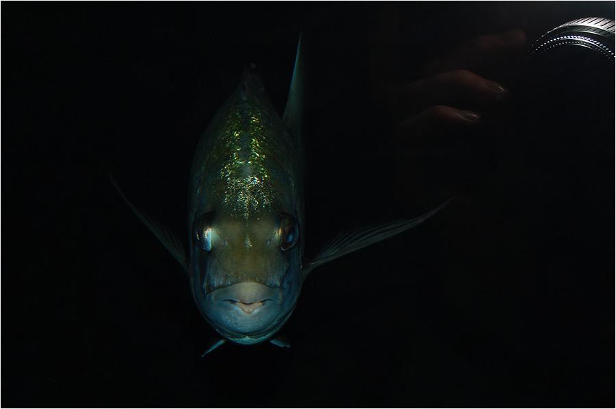 Fisch....