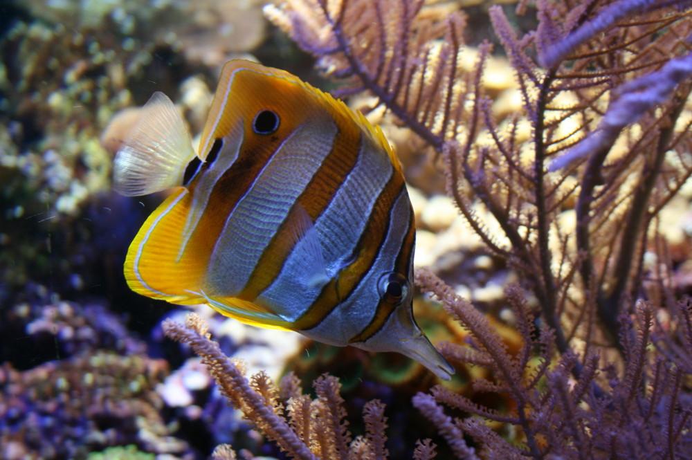 Fisch auf Futtersuche
