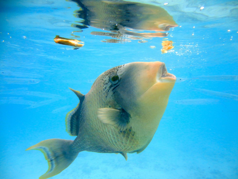 fisch beim fressen foto amp bild tiere wildlife fische