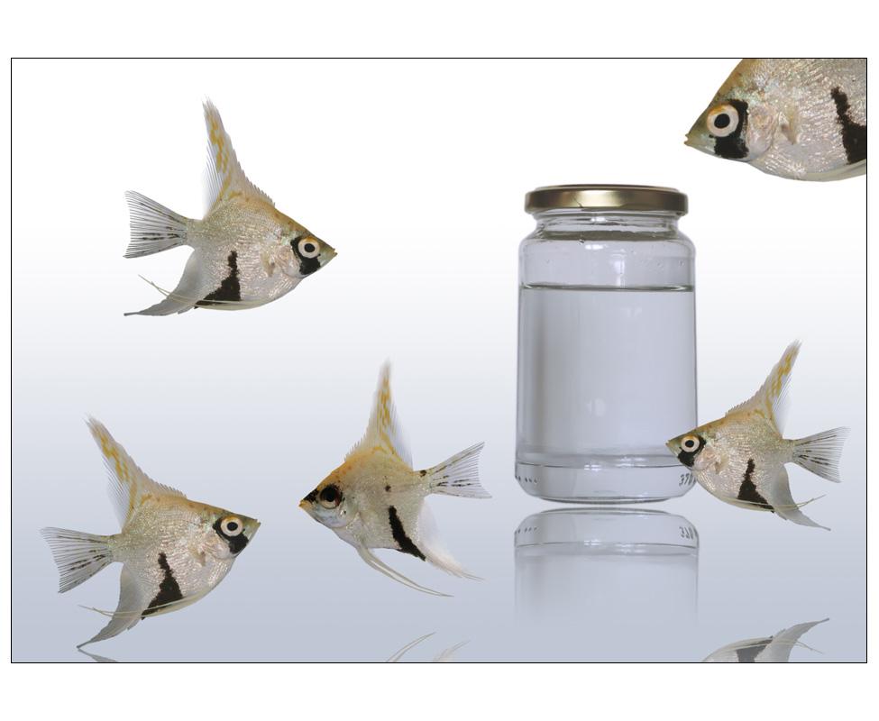 fisch gibt's
