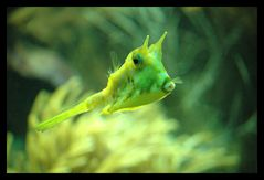 Fisch in Gelb