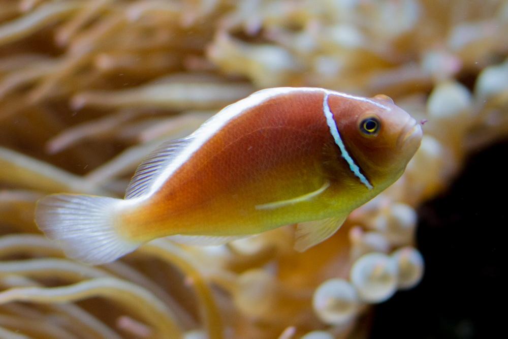Fisch in Orange