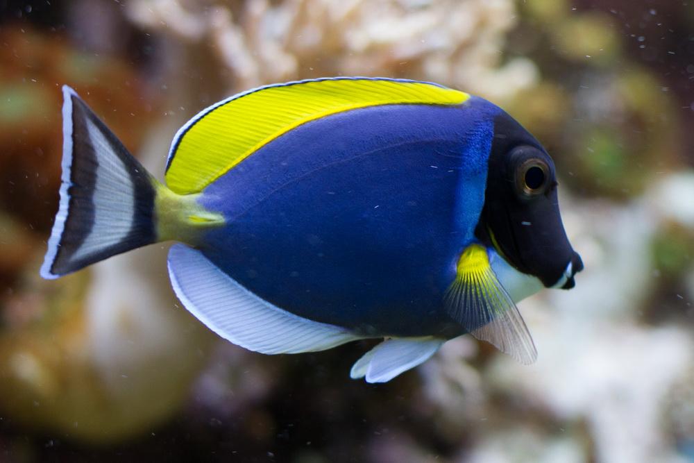 Fisch (langsam gehen mir die Überschriften aus)