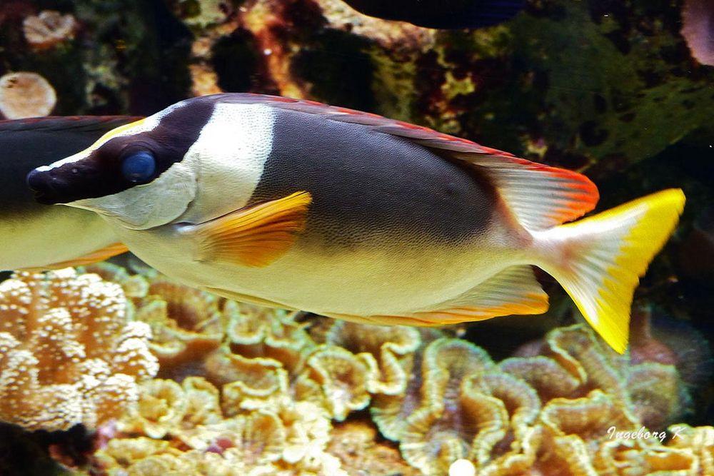 Fisch mit Korallen - Aquazoo Düsseldorf