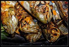Fisch :: nachher