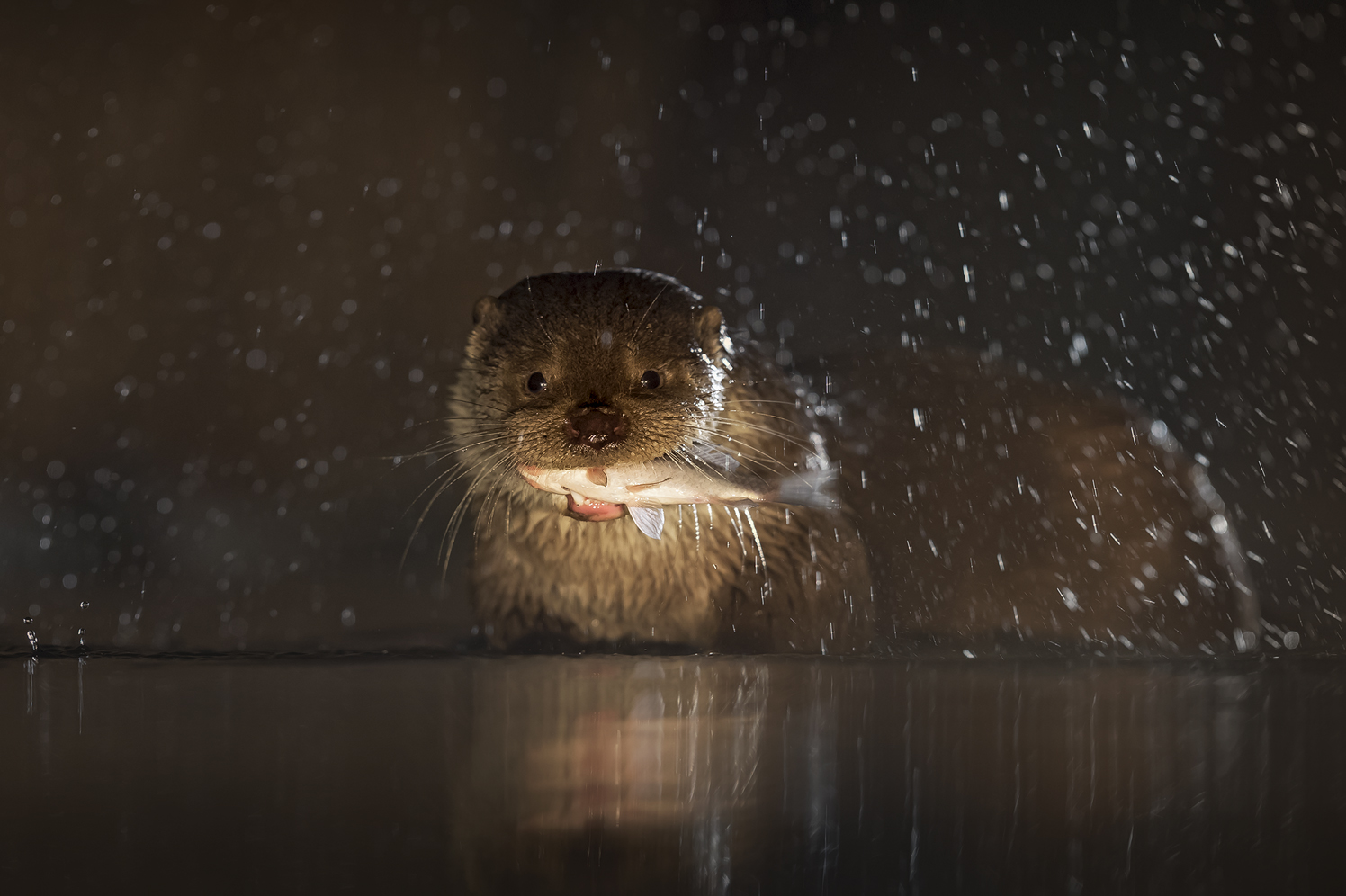 Fisch + Otter