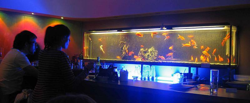 Fisch-TV