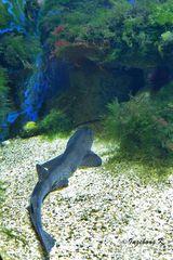 Fisch vor einem Höhleneingang - Aquazoo Düsseldorf