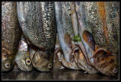 Fisch :: vorher