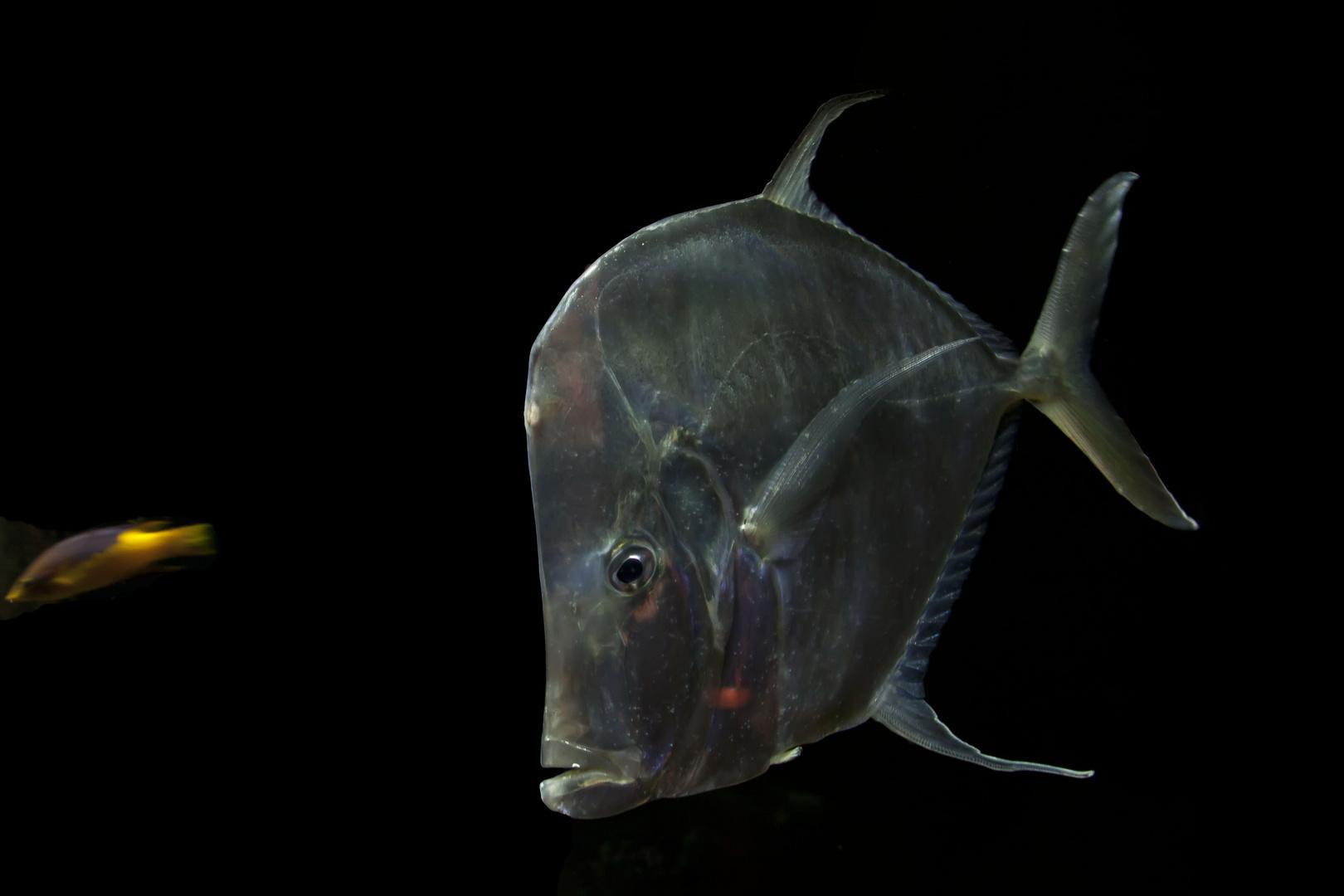 Fisch(e)