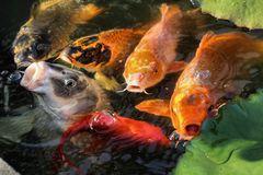 Fische aller Farben