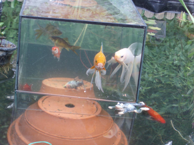 Fische im Aussichtsturm-01