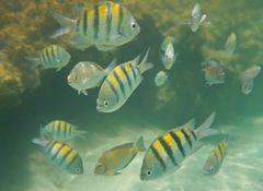 Fische in der Karibik