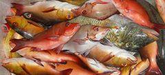 Fische: Über Wasser