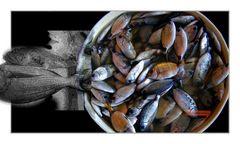 Fische von Amalfi