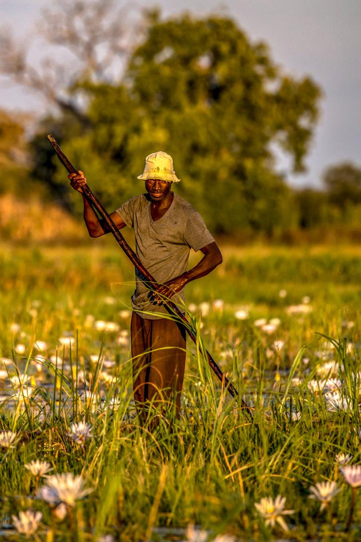 Fischer im Okavango...