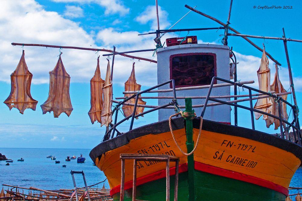 Fischerboot mit Katzenhai