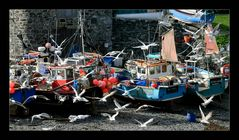 Fischerboote in Cadgwith...