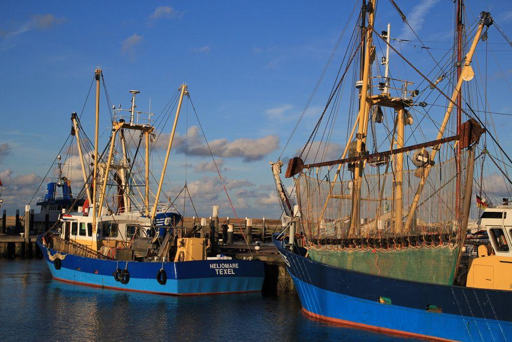Fischfang auf Texel