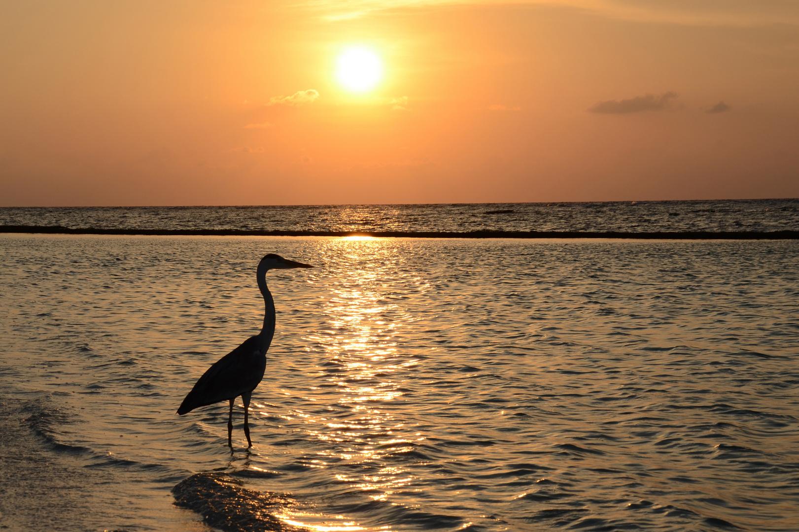 Fischfang bei Sonnenuntergang