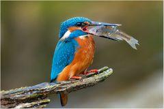 Fisching ... ich bin beim fischen ....