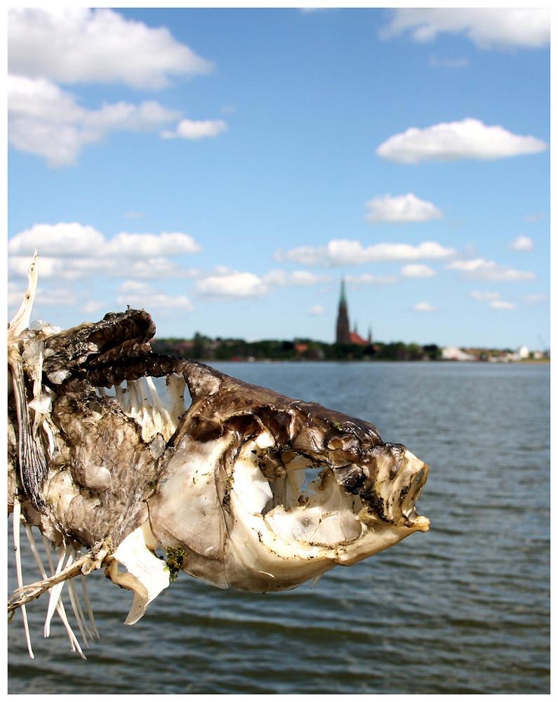 Fischkopf Foto & Bild | deutschland, europe, schleswig