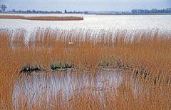 Fischland - Darß - Zingst