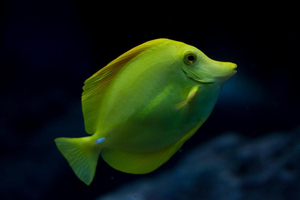 Fischlein klein, grün muss sein.....