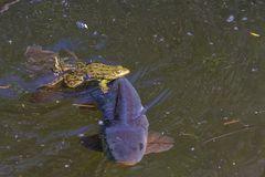 Fischlogistik