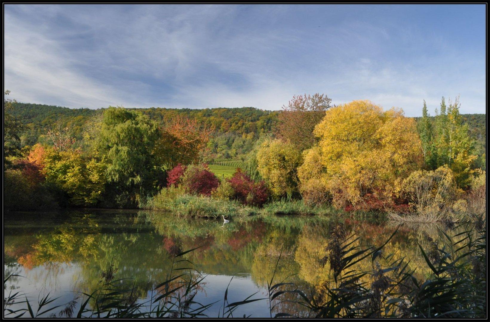 Fischreiher am Schlammweiher - Herbstimpressionen