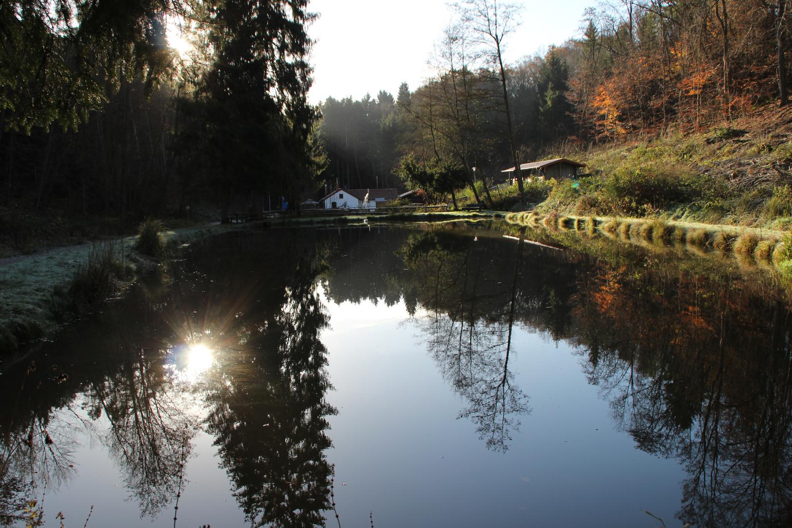 Fischteich in der Morgensonne