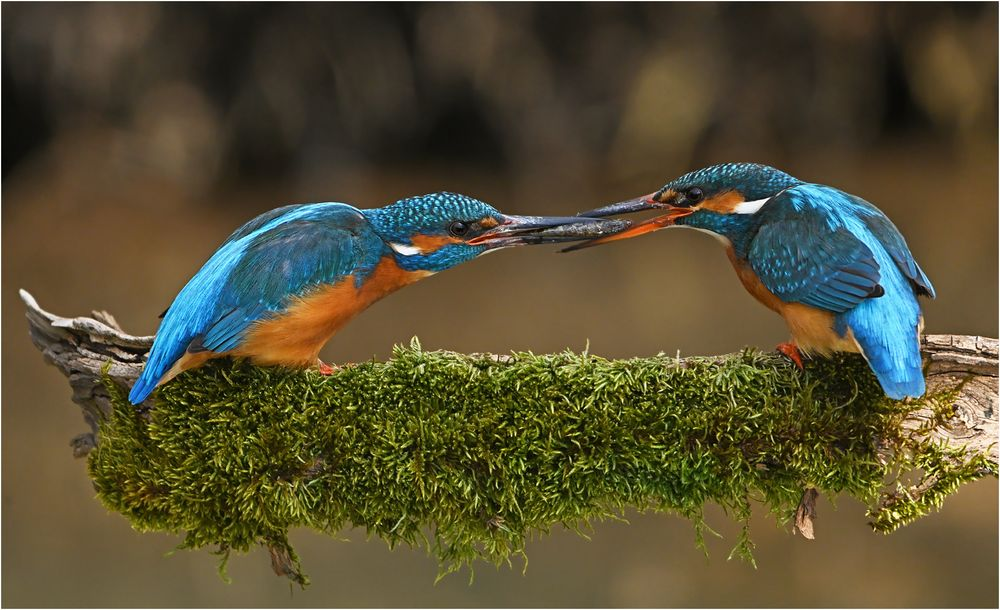 Fischübergabe