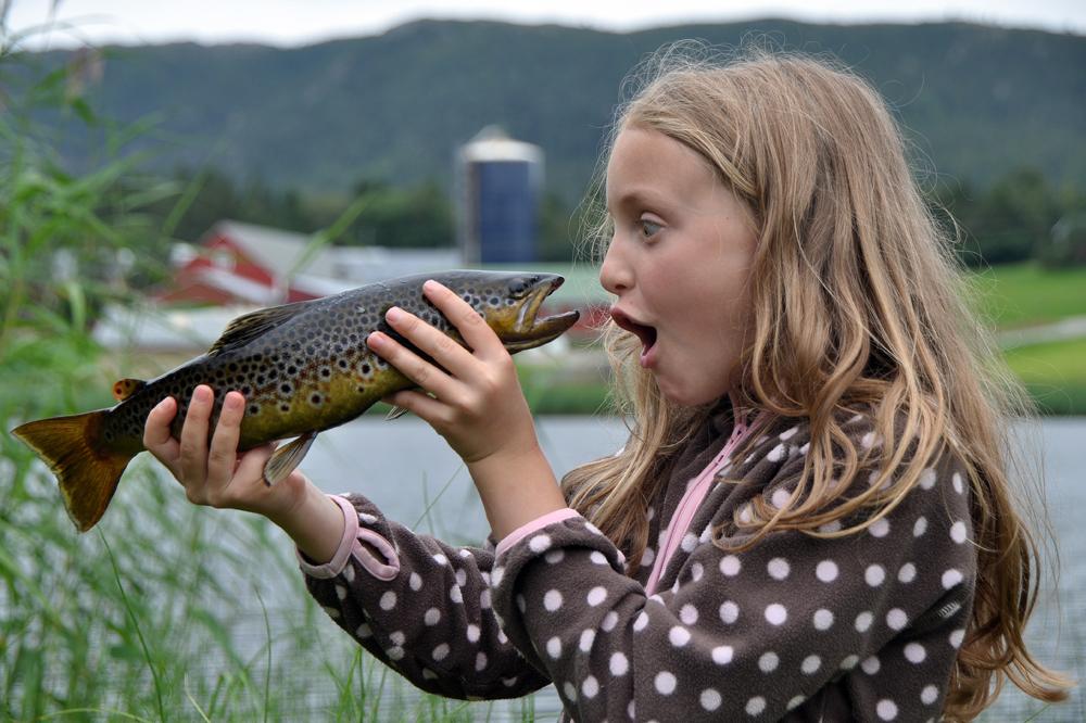 - Fish and Fun -