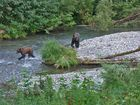 Fish creek, Hyder Alaska