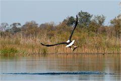 Fish Eagle III